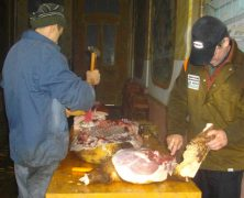 Schweineschlachten bei den Banater Schwaben – DRW-Treffen in Sanktanna