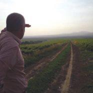 BanatFarming – Landwirtschaft nach deutschem Muster im Banat