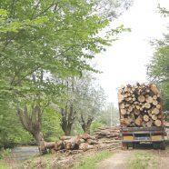 Polizeieinsätze gegen Forstfrevel