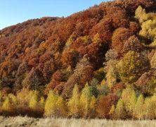 Einsatz für die Urwälder in Rumänien